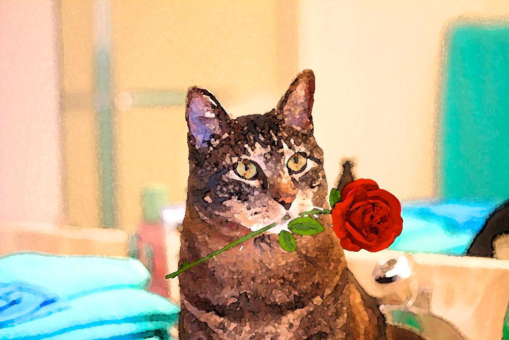 tabs-valentines-rose