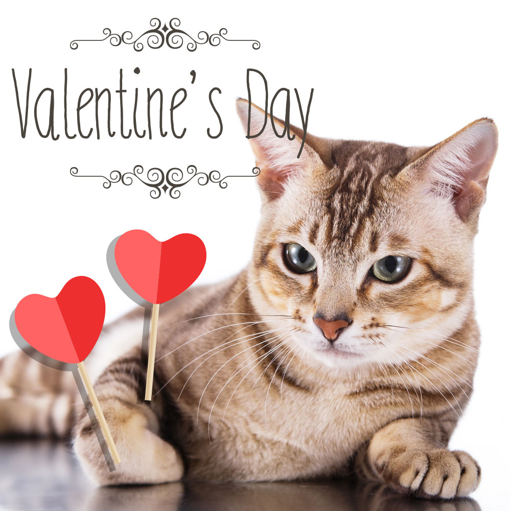 tortie-cat-valentine