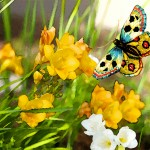 monday-poll-spring-butterfly-2016