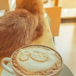 tabs-orange-cat-cafe-cosmetics