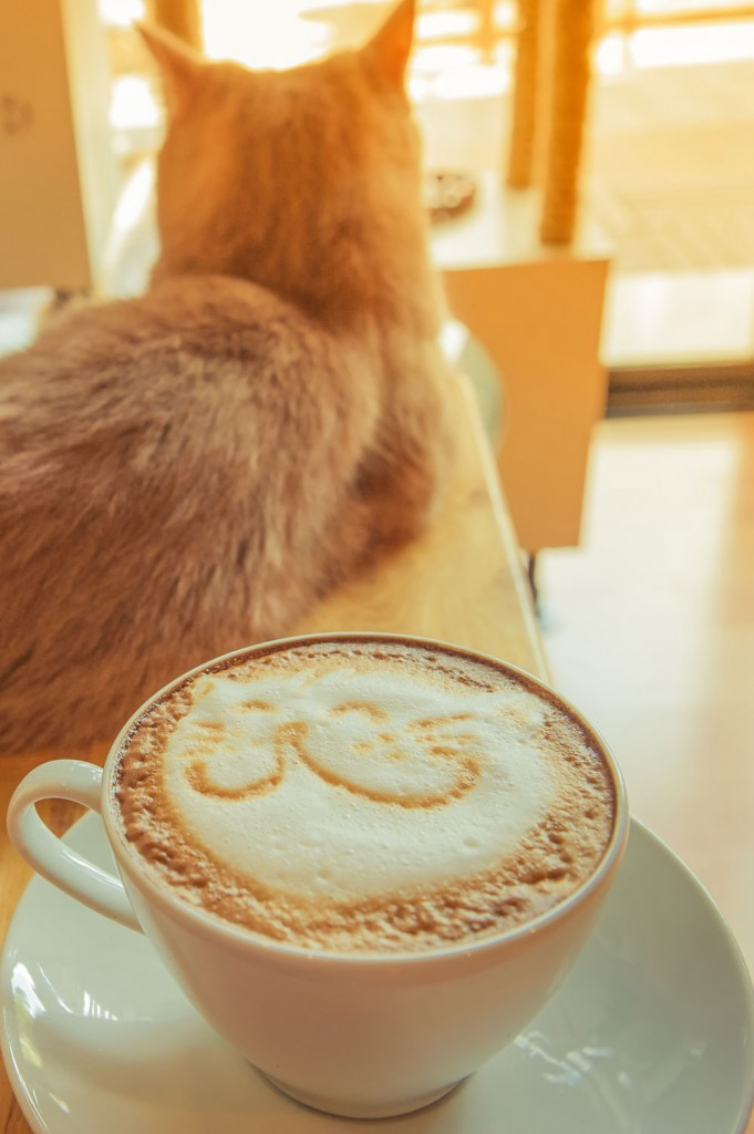 Get a Makeover and Make a Feline Friend at the New Novato Cat Cafe & Cosmetics!
