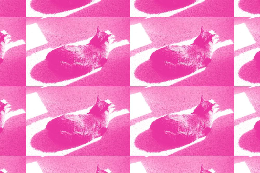 tabs-cat-loaf-pink