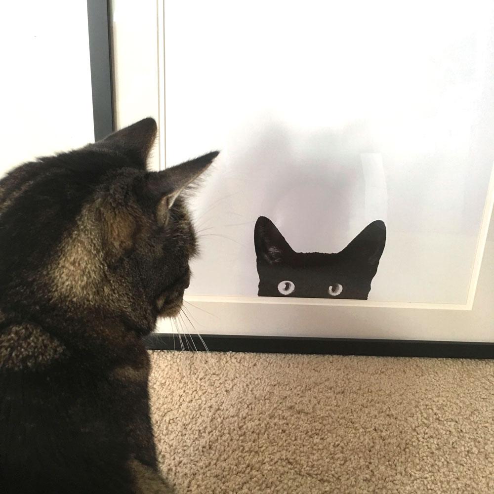 tabs-cat-print-staring