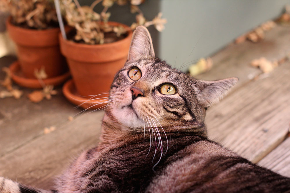 tabs-deck-looking-up-kitty-modeling