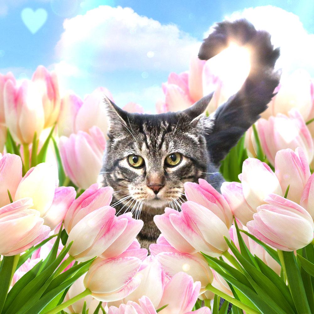 tabs-tulips