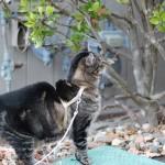 tabs-cat-sniffing-shrub-spring-2016