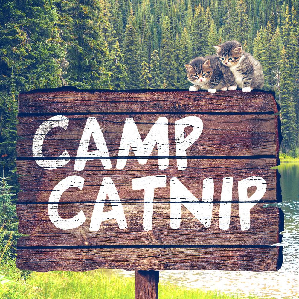 tabs-cat-camp-catnip-sign