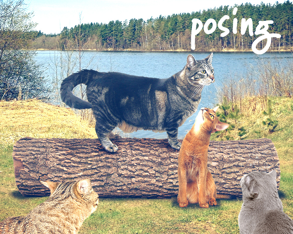 tabs-cat-camp-log-modeling