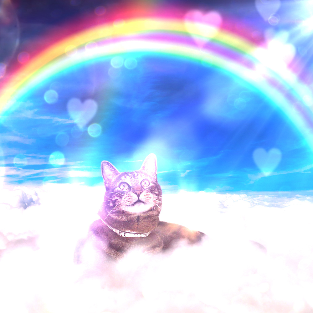 tabs-cat-clouds-double-rainbow