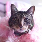 tabs-cat-feather-boa
