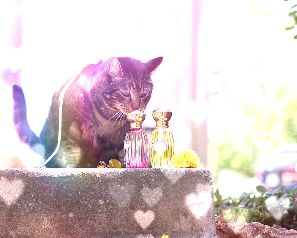 tabs-summer-2016-cat-modeling-perfume-2