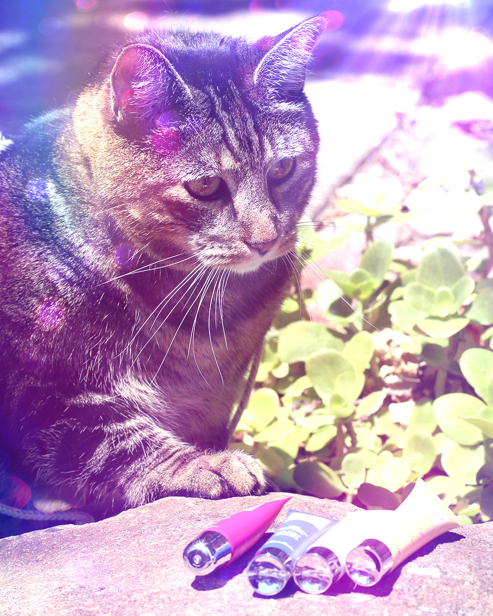 tabs-summer-2016-kitty-model-rock