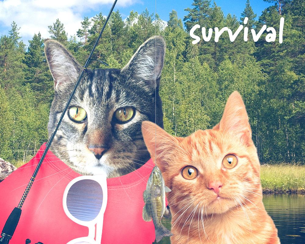 tabs-summer-camp-fishing