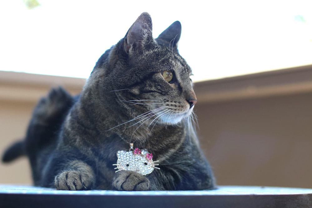 tabs-cat-jewelry-summer-2016-3