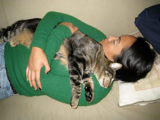 tabs-cat-kitty-model-2008-4