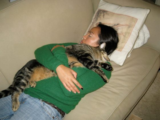 tabs-cat-kitty-model-2008-5