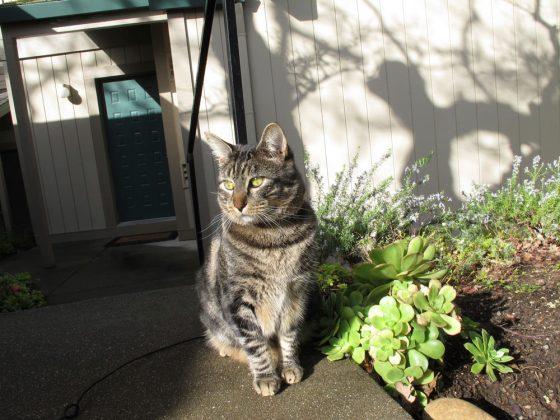 tabs-cat-kitty-model-2010-2