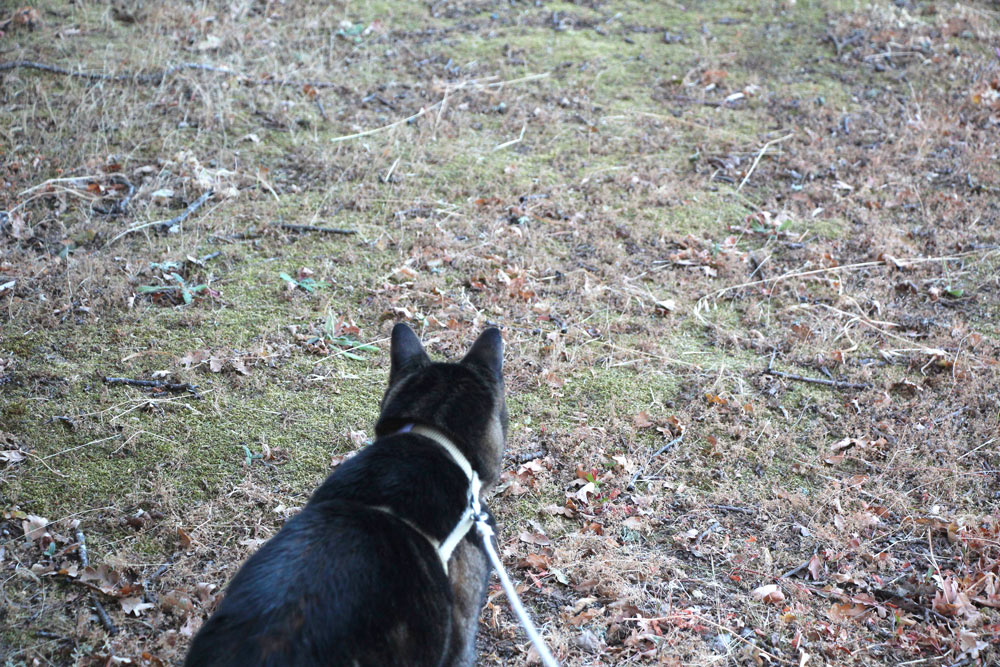tabs-chasing-squirrel-2