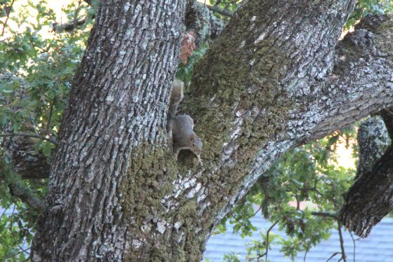 tabs-chasing-squirrel-3