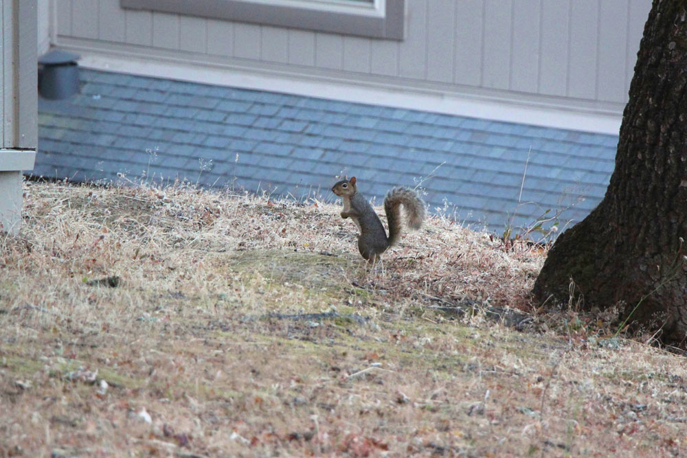 tabs-chasing-squirrel-4