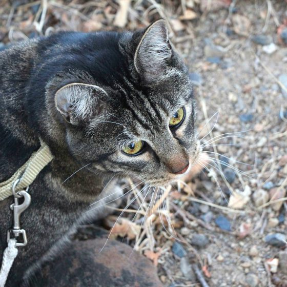 tabs-chasing-squirrel-6