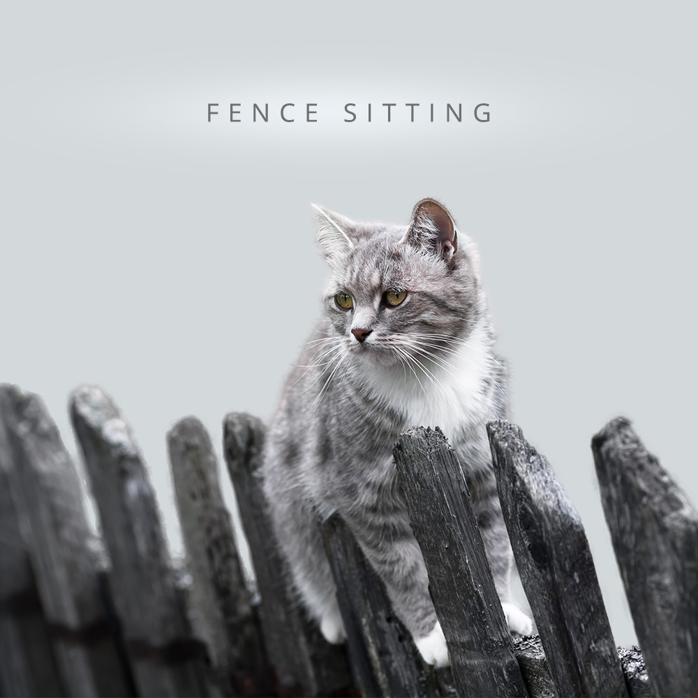 tabs-cat-olympics-fence-sitting