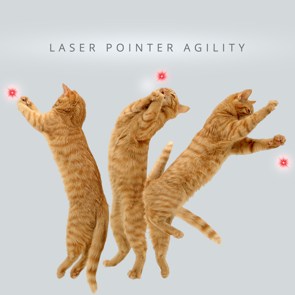 tabs-cat-olympics-laser-pointer