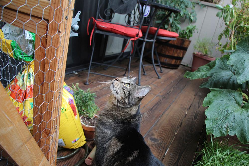 tabs-cat-outside-cat-enclosure-1
