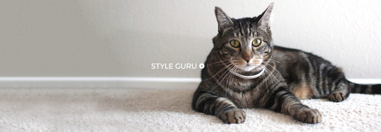 Kitty style guru and fashion icon Tabs the cat