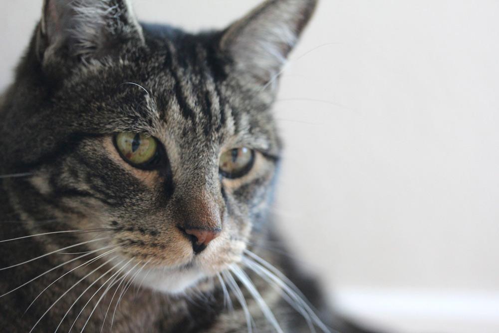 tabs-cat-connorclaire-2
