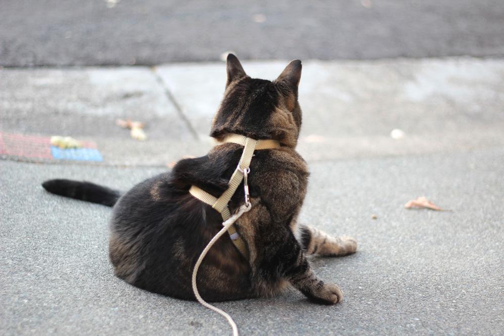 kitty supermodel