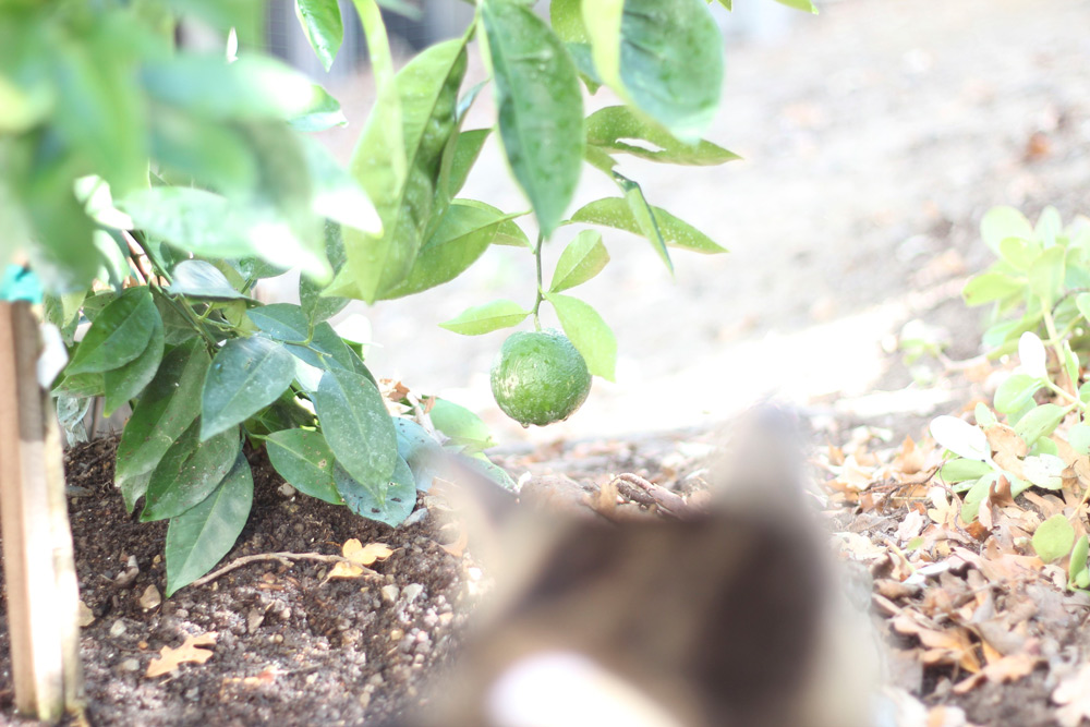 This cat doesn't do oranges