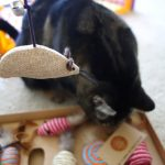 Natural Pet Company cat toys