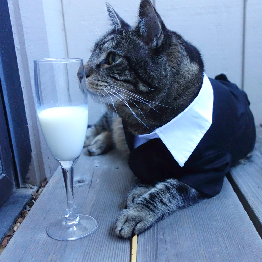 This cat loves tuxedos