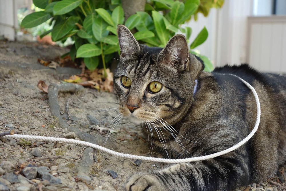 Kitty supermodel Tabs the cat California fall