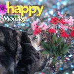 monday-poll-tabby-glitter