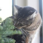 This is a cat-approved Christmas tree
