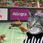 Are you ready for the Kitten Bowl?