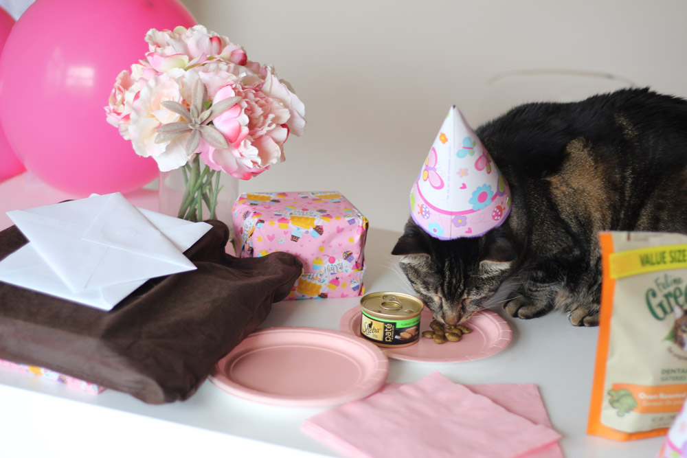 Sundays With Tabs the Cat, Makeup and Beauty Blog Mascot, Vol. 454