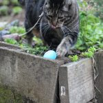 Kitty Easter Egg Hunt