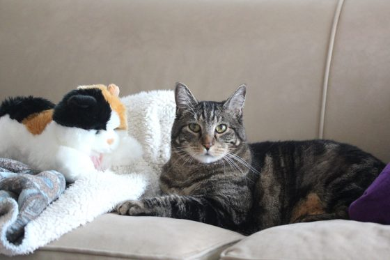 Sundays With Tabs the Cat, Makeup and Beauty Blog Mascot, Vol. 455