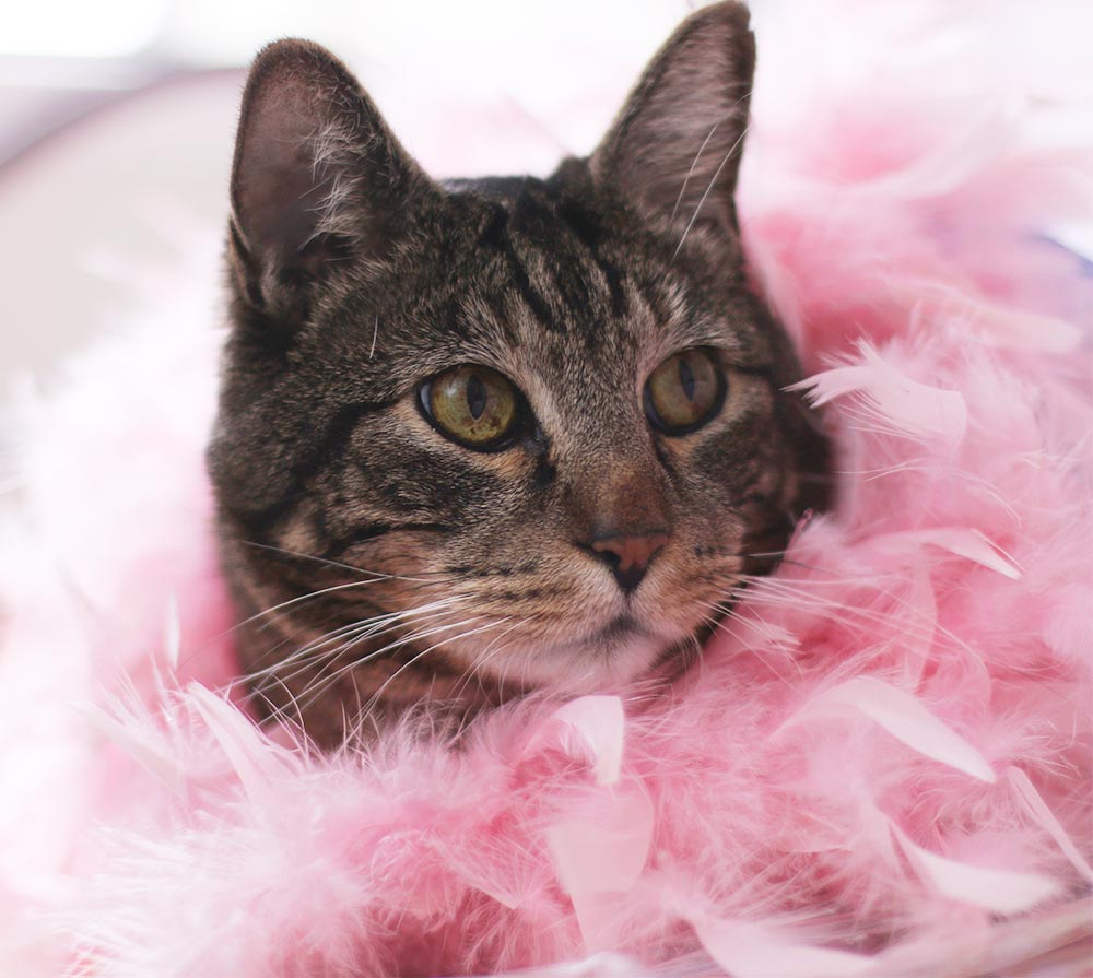 tabs pink feather boa
