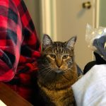 Sundays With Tabs the Cat, Makeup and Beauty Blog Mascot, Vol. 479