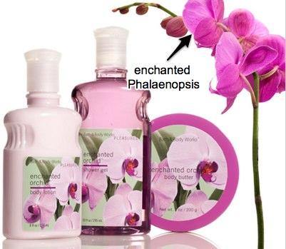 bath-body-works-enchanted-orchid.jpg