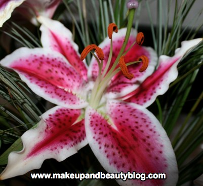 pink-lily-1.jpg