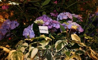 macys-flower-show-union-square-5-1.jpg