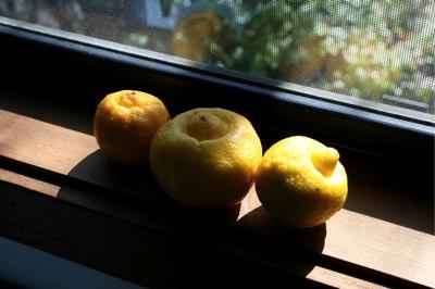 weird-lemons.jpg