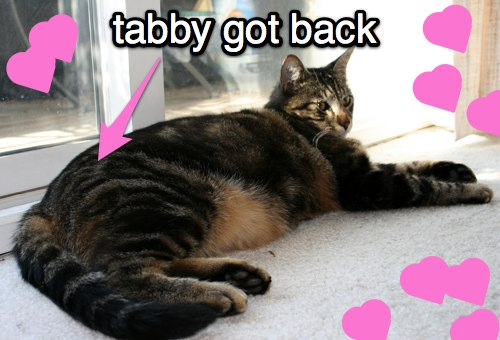 makeup and beauty blog tabby got back