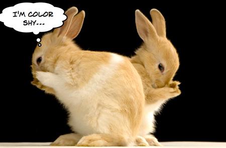 shy-rabbits