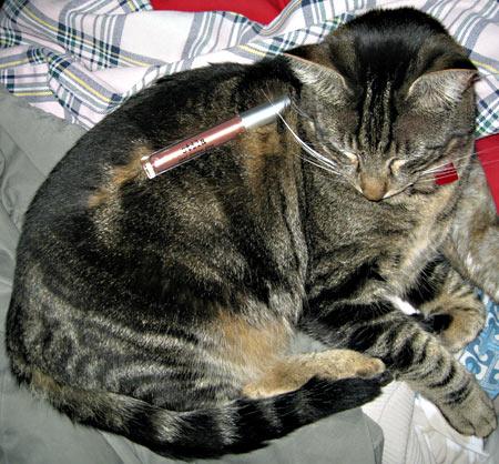 tabs-will-stila-pearl-kitten